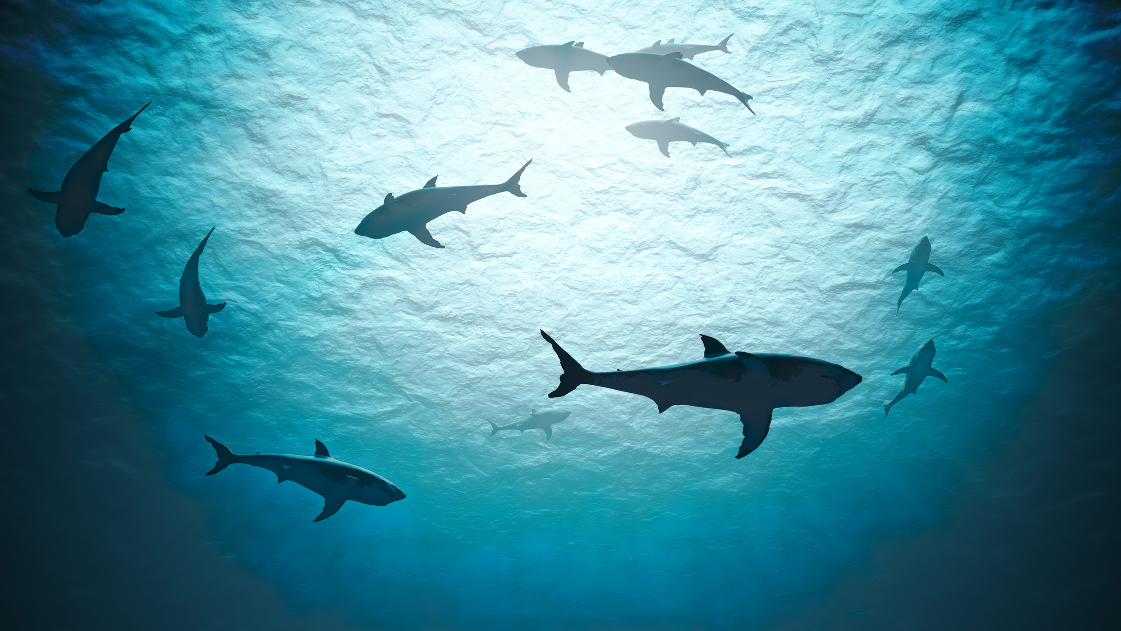 Sharks in the Ocean