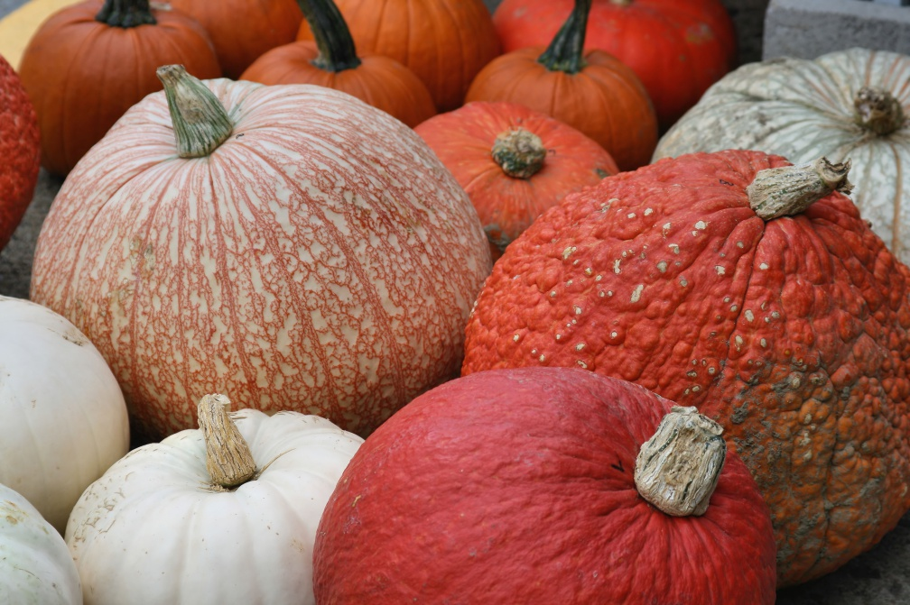 group of orange and white pumpkins